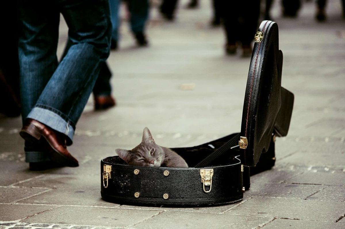 Musica para acalmar gatos