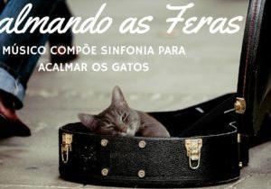 Músico compõe sinfonia para acalmar os gatos